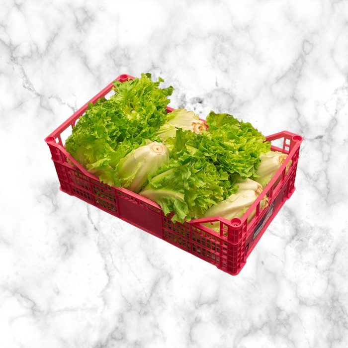 escarole_from_northern_italy