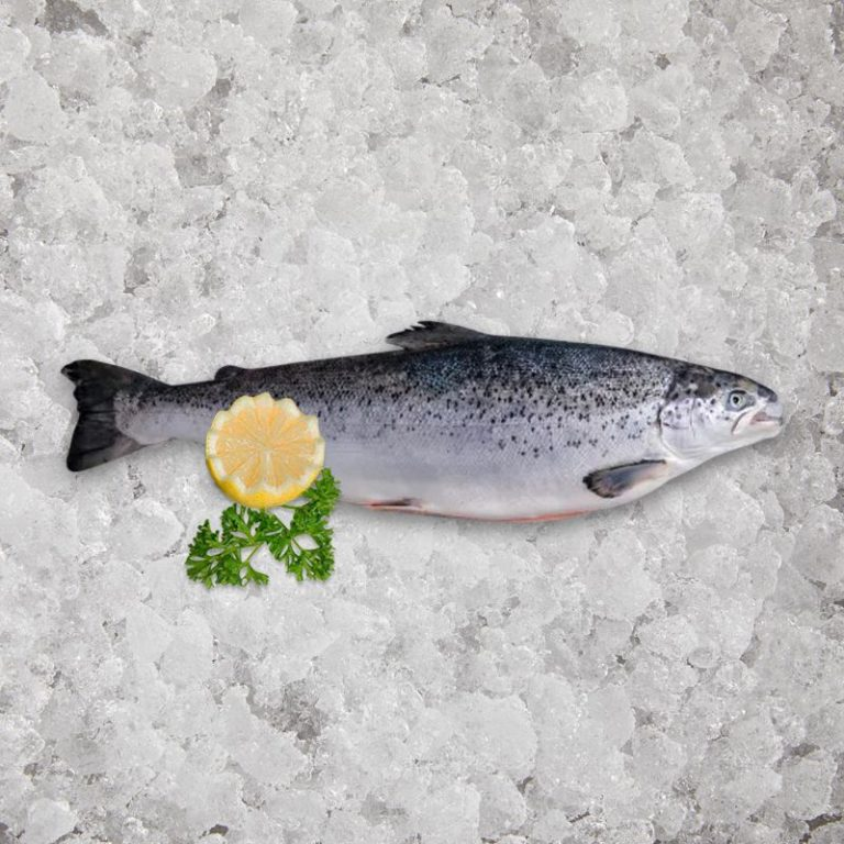 Fresh Scottish Salmon