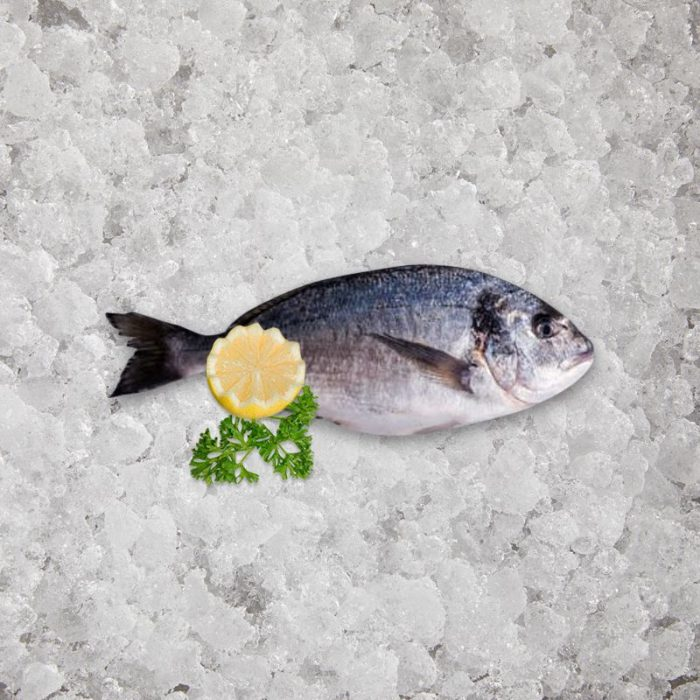 fresh_caught_sea_bream