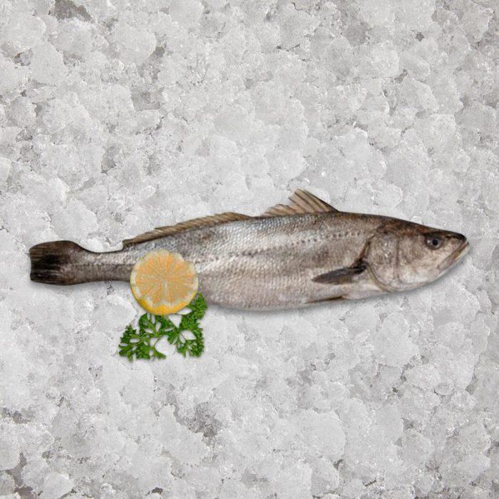 stone_bass_fresh_caught