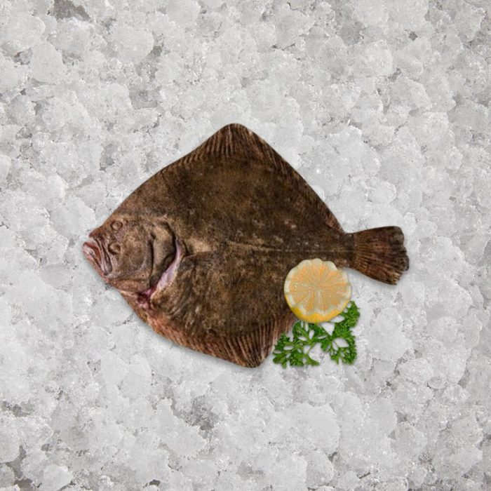 fresh_caught_turbot