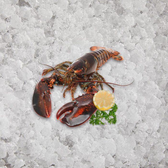 artisan_fishmonger_canadian_lobster