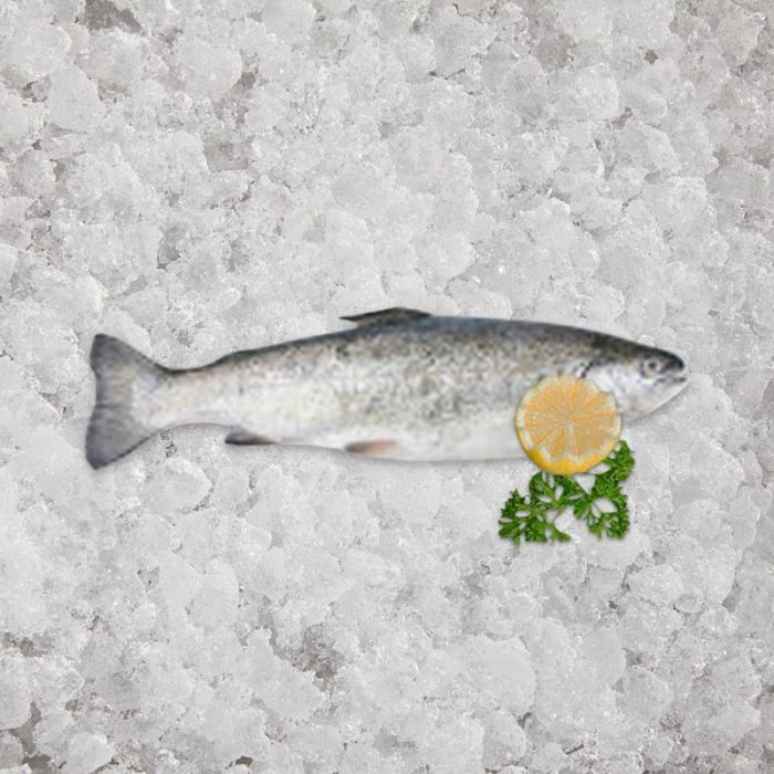 the_artisan_fishmonger_sea_trouts