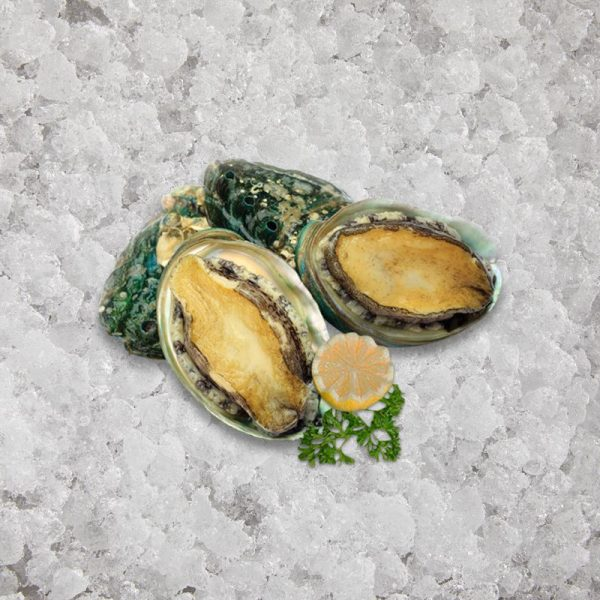 the_artisan_fishmonger_abalone_sashimi_grade