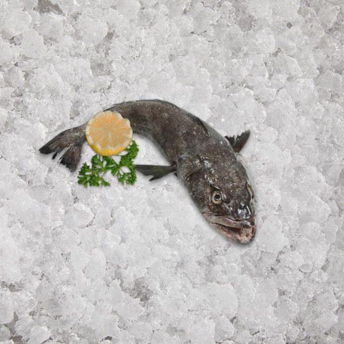 the_artisan_fishmonger_chilean_seabass_6_8