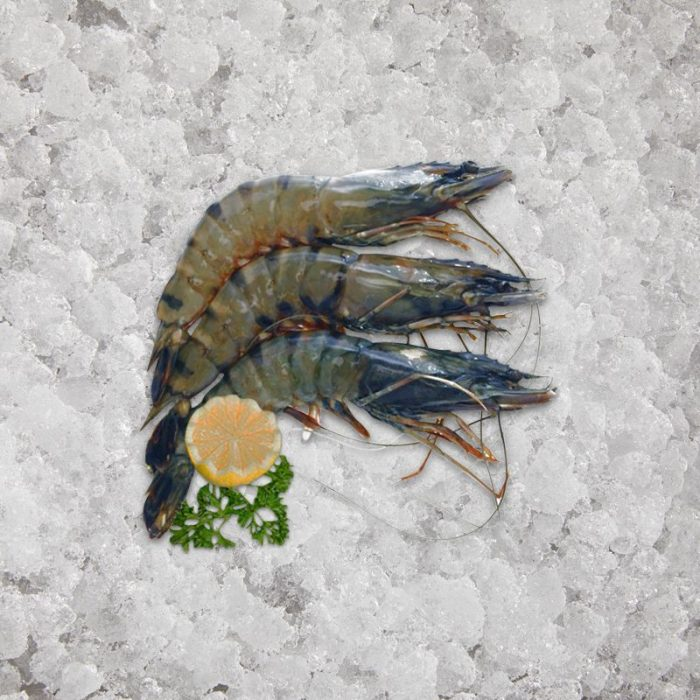 the_artisan_fishmonger_tiger_prawns_fresh_raw