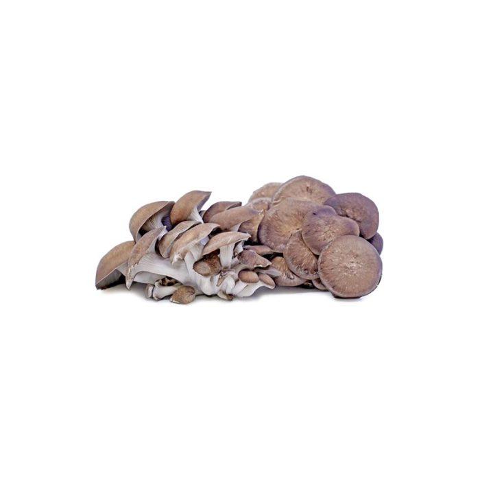 black_oyster_mushrooms_the_artisan_food_company