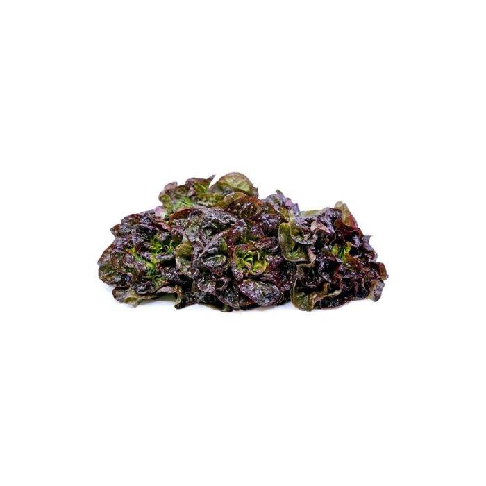 oak_leaf_lettuce_the_artisan_food_company