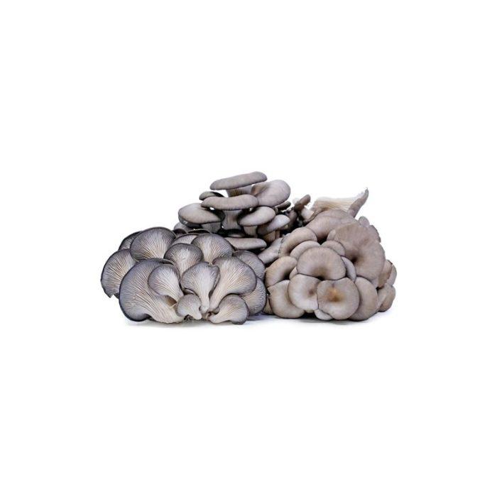 oyster_mushrooms_the_artisan_food_company