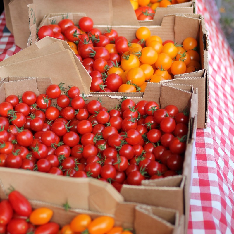 datterino tomatoes red and yellow on a red checkered tablecloth at market